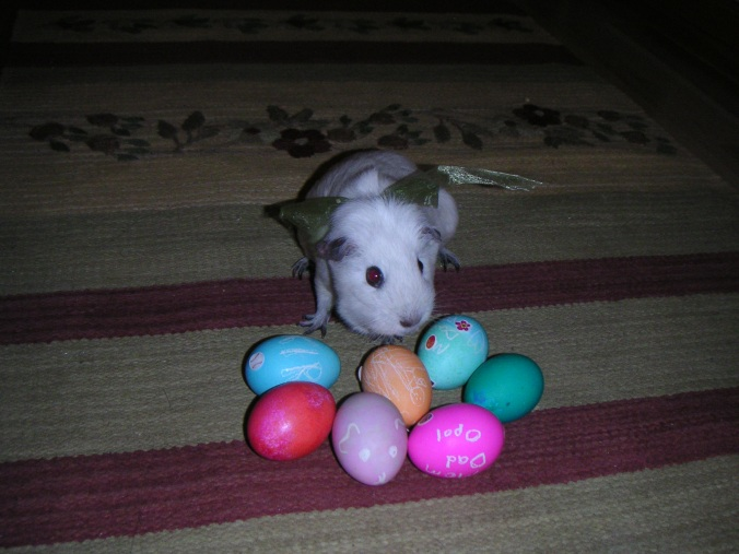 The Easter Guinea Pig