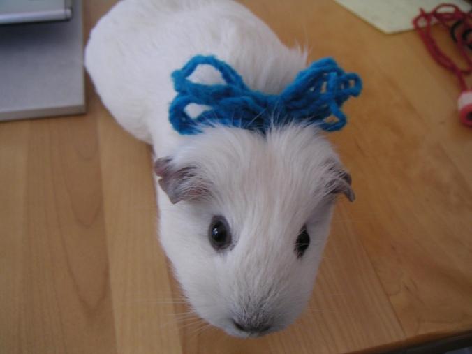 Opie, wearing Beaverslide Yarn