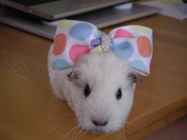 Opie, decorated in polka dots