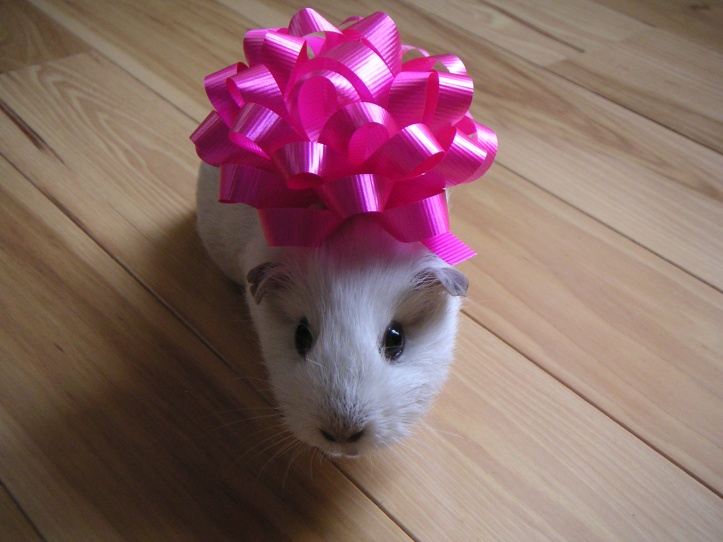 Opie, who is not the birthday pig . . . .