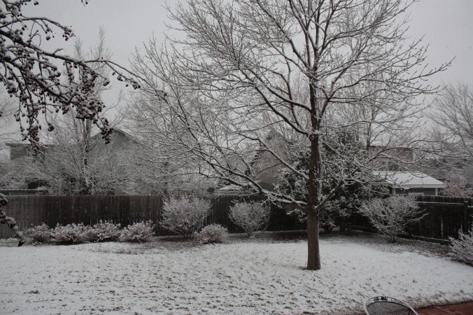 Spring snow!