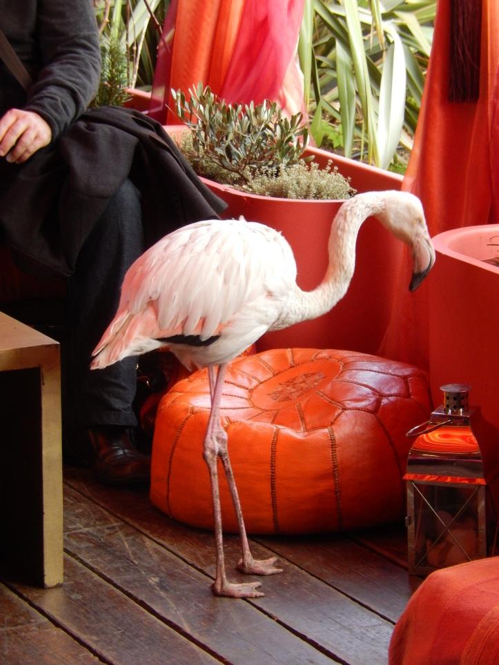 The Roof Gardens flamingo