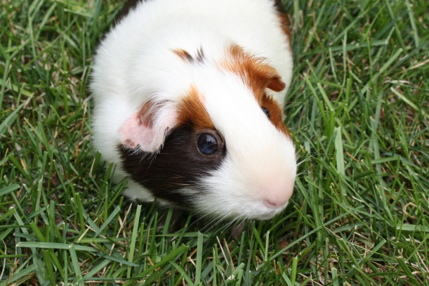 Tula, the Spring Pig