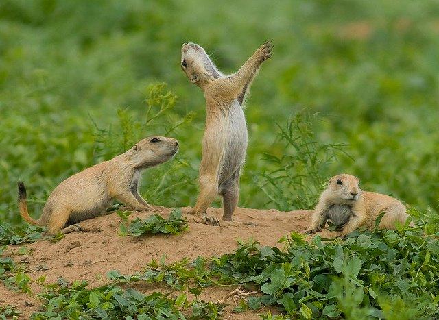 Jump-Yip!_(7116010457)